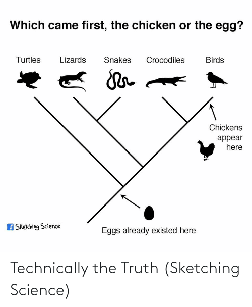 Birds, Chicken, and Science: Which came first, the chicken or the egg?  Turtles  Lizards  Snakes  Crocodiles  Birds  Chickens  appear  here  A Sketching Science  Eggs already existed here Technically the Truth (Sketching Science)