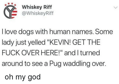 """Dogs, God, and Love: Whiskey Riff  @WhiskeyRiff  I love dogs with human names. Some  lady just yelled """"KEVIN! GET THE  FUCK OVER HERE!"""" and I turned  around to see a Pug waddling over. oh my god"""