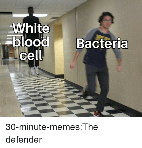 Memes, Target, and Tumblr: White  blood Bacteria  cell 30-minute-memes:The defender