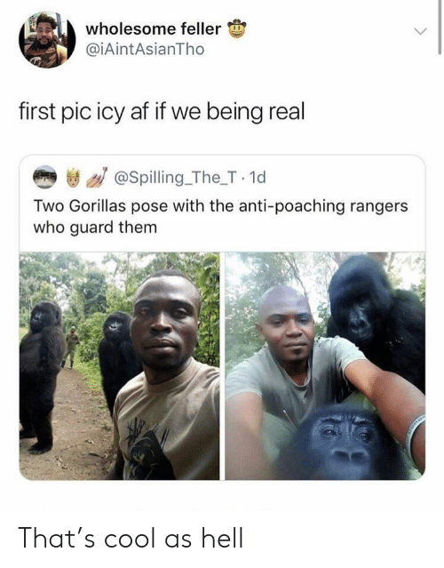 Rangers: wholesome feller  @iAintAsianTho  first pic icy af if we being real  き / @spilling_The_T 1d  Two Gorillas pose with the anti-poaching rangers  who guard them That's cool as hell