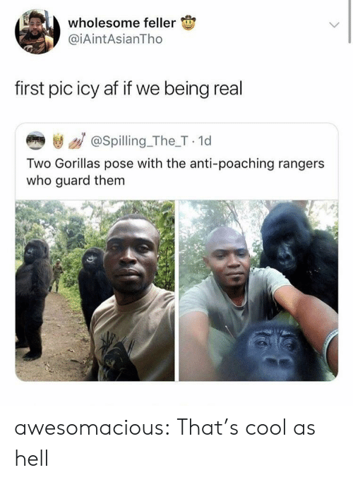Rangers: wholesome feller  @iAintAsianTho  first pic icy af if we being real  き / @spilling_The_T 1d  Two Gorillas pose with the anti-poaching rangers  who guard them awesomacious:  That's cool as hell