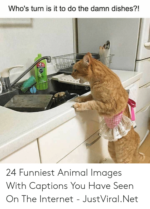Internet, Animal, and Images: Who's turn is it to do the damn dishes?!  4 24 Funniest Animal Images With Captions You Have Seen On The Internet - JustViral.Net
