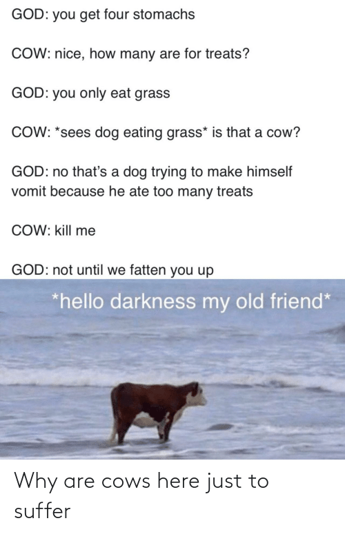 Why Are: Why are cows here just to suffer