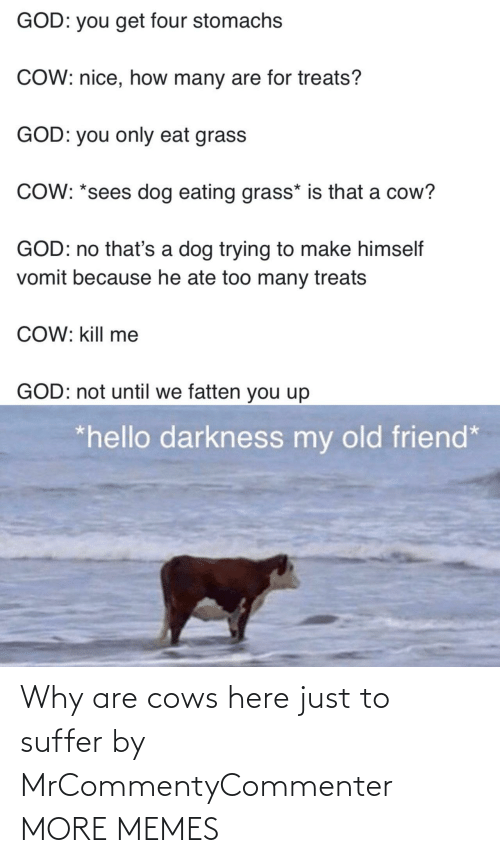 Why Are: Why are cows here just to suffer by MrCommentyCommenter MORE MEMES
