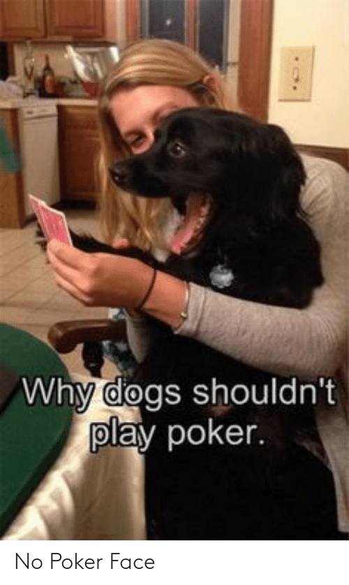 Dogs, Poker, and Play: Why dogs shouldn't  play poker. No Poker Face