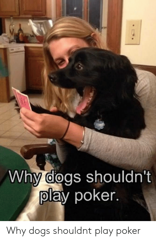 Dogs, Poker, and Play: Why dogs shouldn't  play poker Why dogs shouldnt play poker