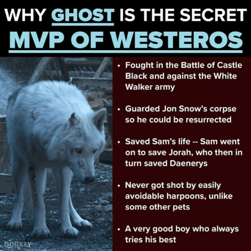 Sams: WHY GHOST IS THE SECRET  MVP OF WESTEROS  . Fought in the Battle of Castle  Black and against the White  Walker army  . Guarded Jon Snow's corpse  so he could be resurrected  Saved Sam's life Sam went  on to save Jorah, who then in  turn saved Daenerys  . Never got shot by easily  avoidable harpoons, unlike  some other pets  . A very good boy who always  tries his best