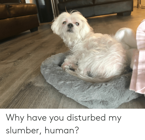 Disturbed, Human, and Why: Why have you disturbed my slumber, human?