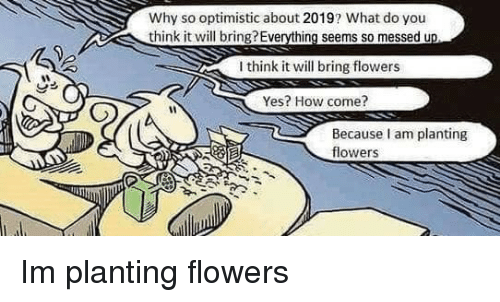 Flowers, Optimistic, and How: Why so optimistic about 2019? What do you  think it will bring?Everything seems so messed u  I think it will bring flowers  Yes? How come?  Because am planting  flowers Im planting flowers