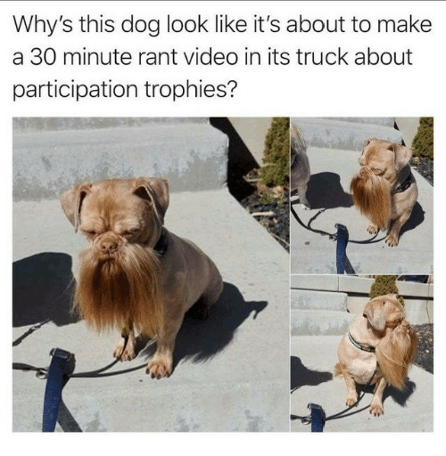 trophies: Why's this dog look like it's about to make  a 30 minute rant video in its truck about  participation trophies?