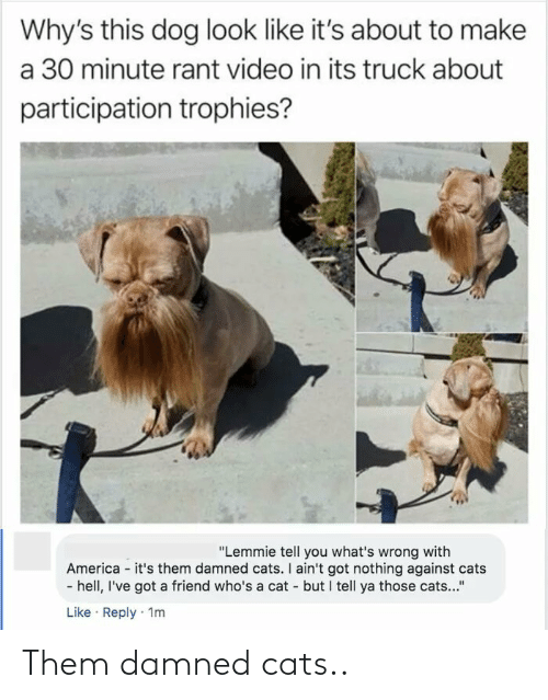 """trophies: Why's this dog look like it's about to make  a 30 minute rant video in its truck about  participation trophies?  """"Lemmie tell you what's wrong with  America - it's them damned cats. I ain't got nothing against cats  - hell, I've got a friend who's a cat - but I tell ya those cats...""""  Like · Reply · 1m Them damned cats.."""