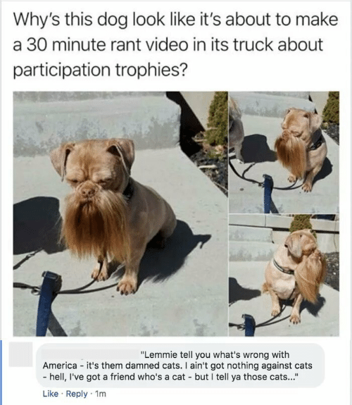 """trophies: Why's this dog look like it's about to make  a 30 minute rant video in its truck about  participation trophies?  """"Lemmie tell you what's wrong with  America - it's them damned cats. I ain't got nothing against cats  - hell, I've got a friend who's a cat - but I tell ya those cats...""""  Like · Reply · 1m"""