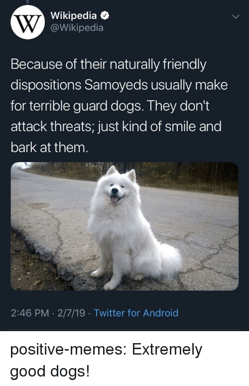 Android, Dogs, and Memes: Wikipedia  @Wikipedia  Because of their naturally friendly  dispositions Samoyeds usually make  for terrible guard dogs. They don't  attack threats; just kind of smile and  bark at them  2:46 PM 2/7/19 Twitter for Android positive-memes:  Extremely good dogs!