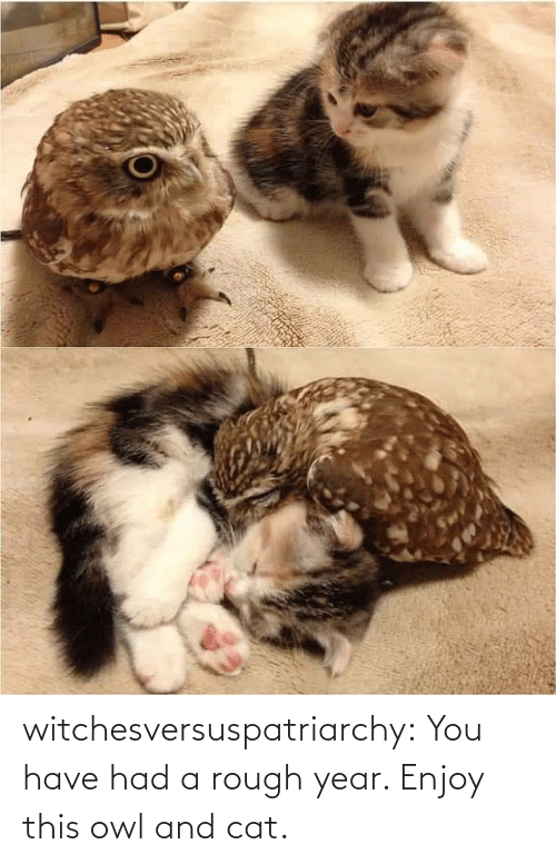 Rough: witchesversuspatriarchy:  You have had a rough year. Enjoy this owl and cat.