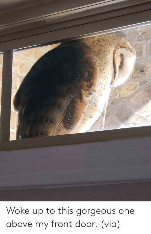 Imgur: Woke up to this gorgeous one above my front door.(via)