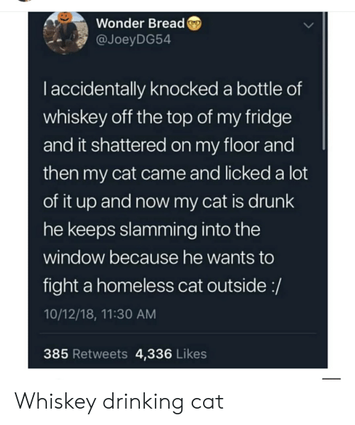 Drinking, Drunk, and Homeless: Wonder Bread  @JoeyDG54  Taccidentally knocked a bottle of  whiskey off the top of my fridge  and it shattered on my floor and  then my cat came and licked a lot  of it up and now my cat is drunk  he keeps slamming into the  window because he wants to  fight a homeless cat outside:/  10/12/18, 11:30 AM  385 Retweets 4,336 Likes Whiskey drinking cat