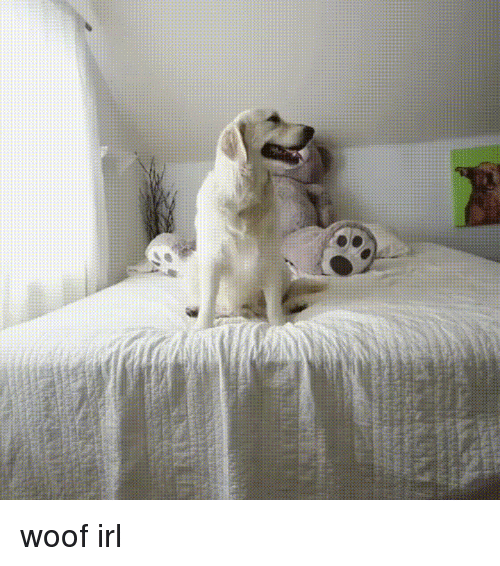 woofing: woof irl