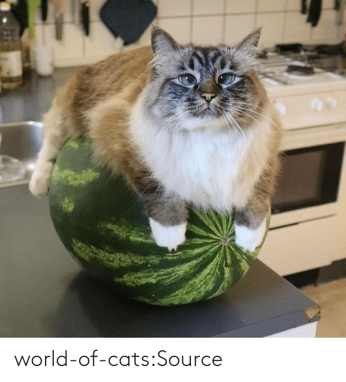 World: world-of-cats:Source