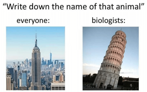 """Memes, Animal, and 🤖: """"Write down the name of that animal""""  biologists:  everyone:"""