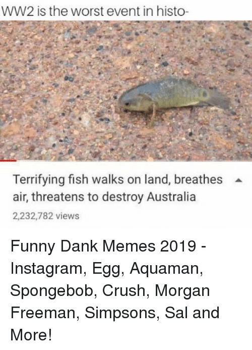 Crush, Dank, and Funny: WW2 is the worst event in histo-  Terrifying fish walks on land, breathes  air, threatens to destroy Australia  2,232,782 views Funny Dank Memes 2019 - Instagram, Egg, Aquaman, Spongebob, Crush, Morgan Freeman, Simpsons, Sal and More!