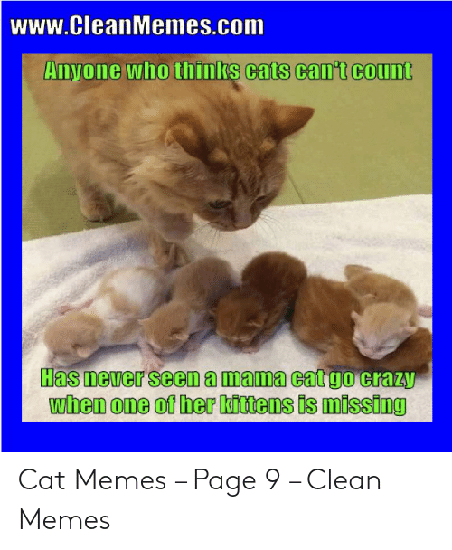 Wwwcleanmemescom Anyone Who Thinks Cats Cant Count Has
