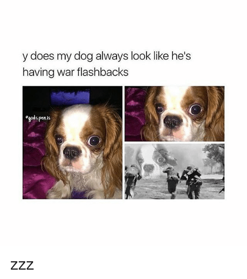 4719e8aa30 🐣 25+ Best Memes About My Dog