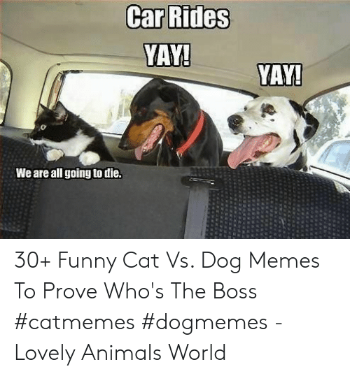 Animals, Funny, and Memes: YAY!  YAY!  We are all going to die. 30+ Funny Cat Vs. Dog Memes To Prove Who's The Boss #catmemes #dogmemes - Lovely Animals World