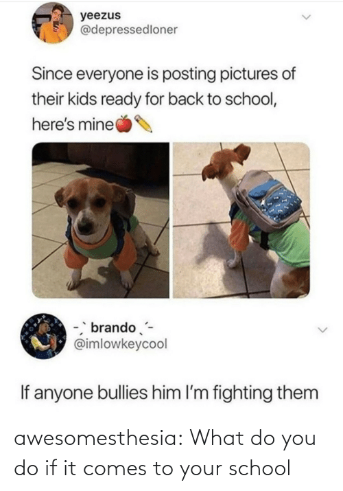 School, Tumblr, and Blog: yeezus  @depressedloner  Since everyone is posting pictures of  their kids ready for back to school,  here's mine  -, brando-  @imlowkeycool  If anyone bullies him l'm fighting them awesomesthesia:  What do you do if it comes to your school