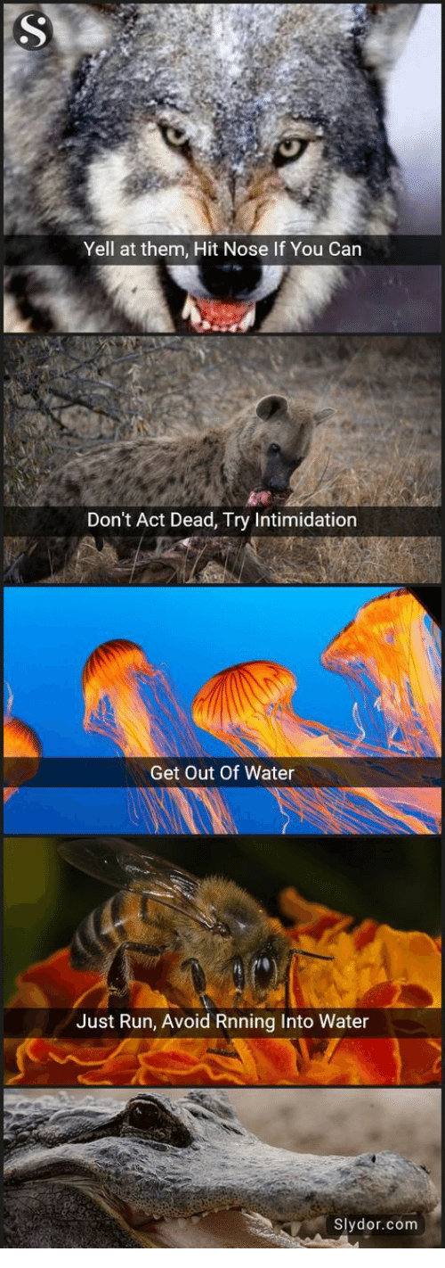 Run, Water, and Intimidation: Yell at them, Hit Nose If You Can  Don't Act Dead, Try Intimidation  Get Out Of Water  Just Run, Avoid Rnning Into Water  Slydor.com