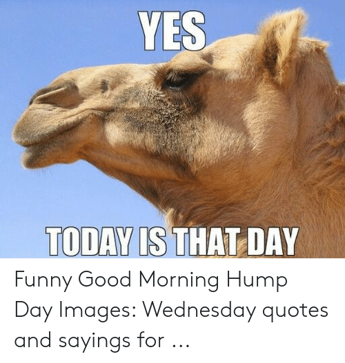 25+ Best Memes About Wednesday Quotes | Wednesday Quotes Memes