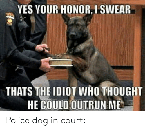 court: YES YOUR HONOR, I SWEAR  THATS THE IDIOT WHO THOUGHT  HE COULD OUTRUN ME Police dog in court: