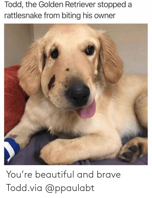 Brave: You're beautiful and brave Todd.via@ppaulabt