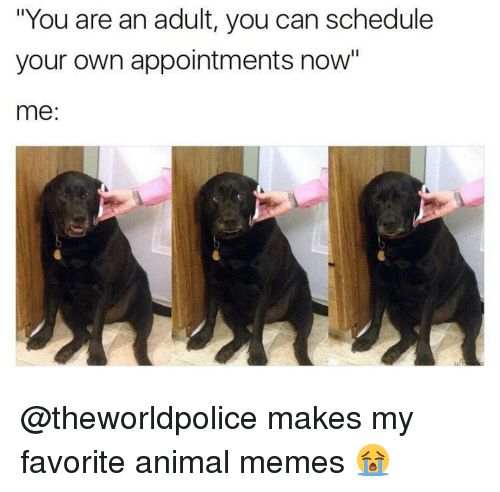 """Animation Meme: """"You are an adult, you can schedule  your own appointments now""""  me @theworldpolice makes my favorite animal memes 😭"""