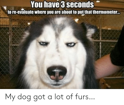 Got, Dog, and You: You have 3 seconds  to re-evaluate where you are about to put that thermometer. My dog got a lot of furs…