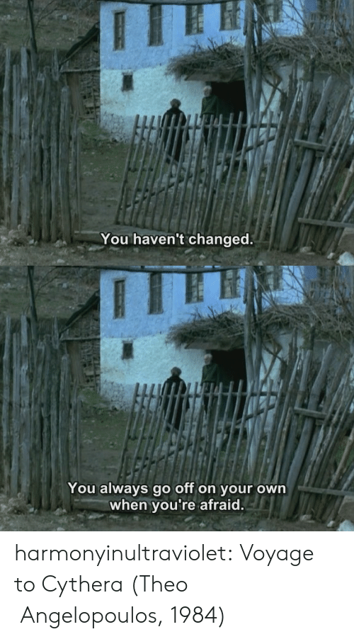 Go Off: You haven't changed.   You always go off on your own  when you're afraid. harmonyinultraviolet:    Voyage to Cythera (Theo Angelopoulos, 1984)