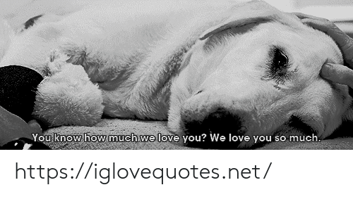 Love, How, and Net: You know how much we love you? We love you so much. https://iglovequotes.net/
