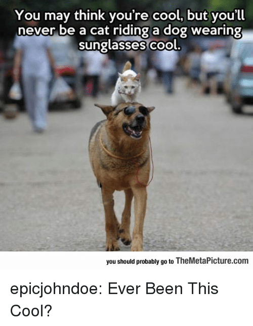 Riding A Dog: You may think you're cool, but you'll  never be a cat riding a dog wearing  sunglasses co  ol.  you should probably go to TheMetaPicture.com epicjohndoe:  Ever Been This Cool?