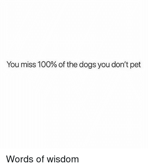 Anaconda, Dogs, and Girl Memes: You miss 100% of the dogs you don't pet Words of wisdom