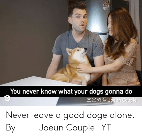 you never know: You never know what your dogs gonna do  조은커플 Joeun Couple Never leave a good doge alone.  By 조은커플 Joeun Couple | YT