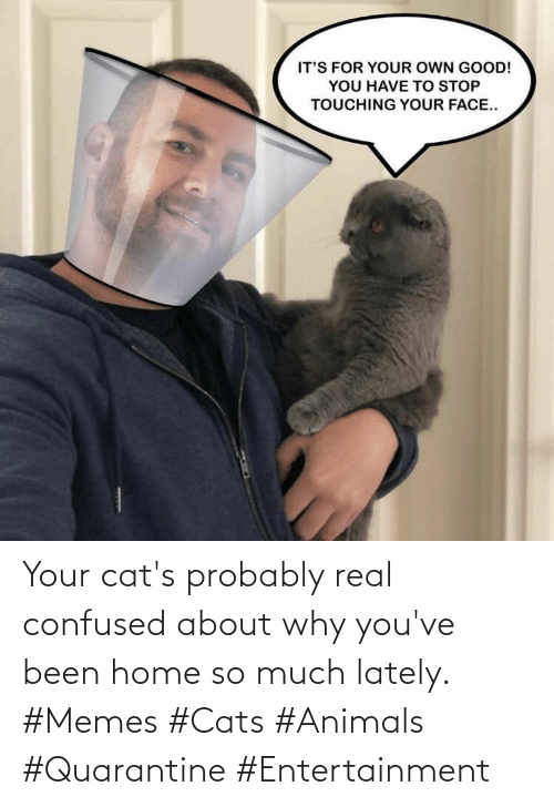 so much: Your cat's probably real confused about why you've been home so much lately. #Memes #Cats #Animals #Quarantine #Entertainment