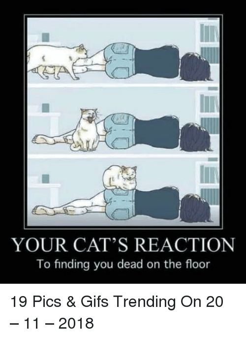 Cats, Gifs, and Pics: YOUR CAT'S REACTION  To finding you dead on the floor 19 Pics & Gifs Trending On 20 – 11 – 2018