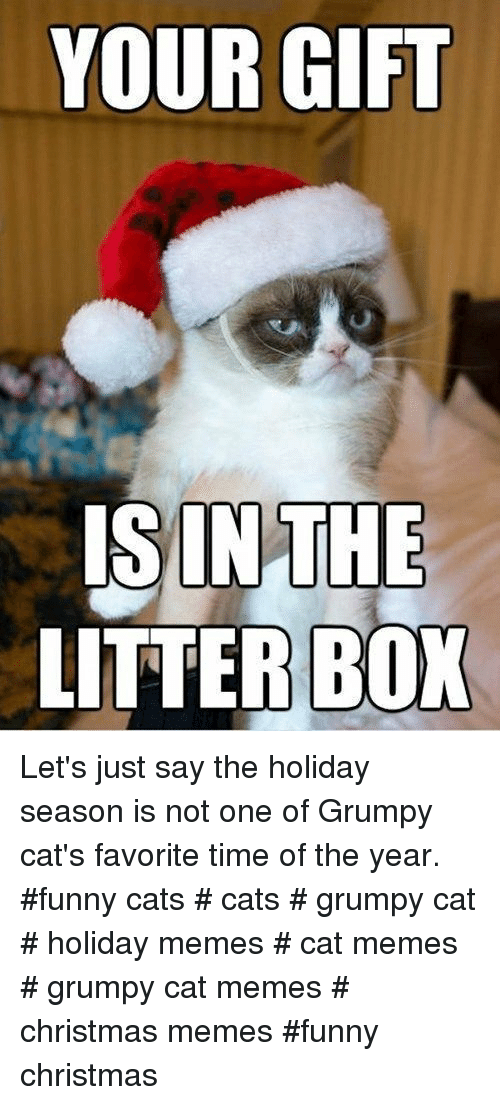 Cats, Christmas, and Funny: YOUR GIFT  ISINTHE  LITTER BOX Let's just say the holiday season is not one of Grumpy cat's favorite time of the year. #funny cats # cats # grumpy cat # holiday memes # cat memes # grumpy cat memes # christmas memes #funny christmas