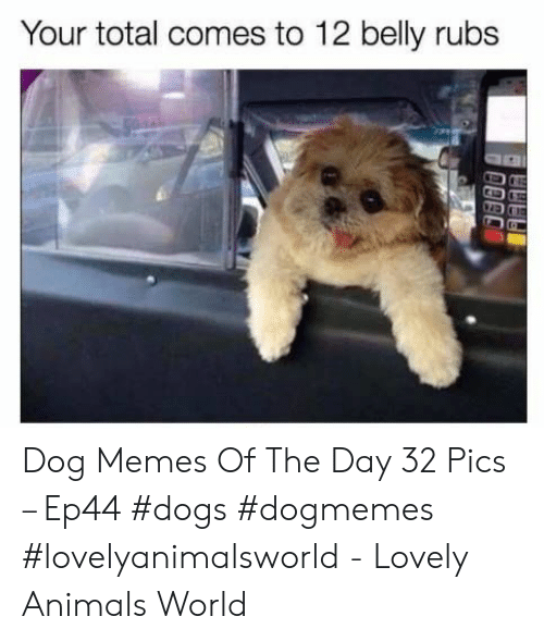 Animals, Dogs, and Memes: Your total comes to 12 belly rubs Dog Memes Of The Day 32 Pics – Ep44 #dogs #dogmemes #lovelyanimalsworld - Lovely Animals World