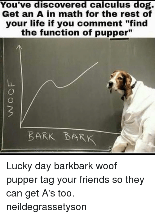 """woofing: You've discovered calculus dog.  Get an A in math for the rest of  your life if you comment """"find  the function of pupper""""  BARK BARK Lucky day barkbark woof pupper tag your friends so they can get A's too. neildegrassetyson"""