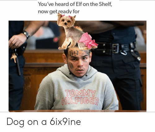 Elf, Elf on the Shelf, and Dank Memes: You've heard of Elf on the Shelf,  now get ready for  TOMMY  HOLFIGER Dog on a 6ix9ine