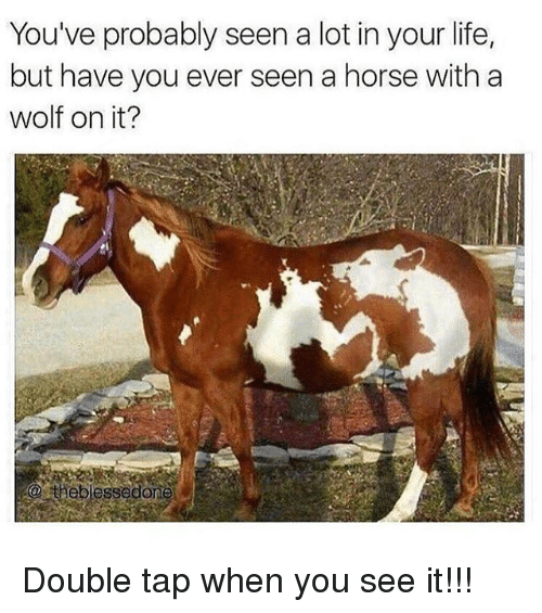 Life, Memes, and When You See It: You've probably seen a lot in your life,  but have you ever seen a horse with a  wolf on it?  a theblessed Double tap when you see it!!!
