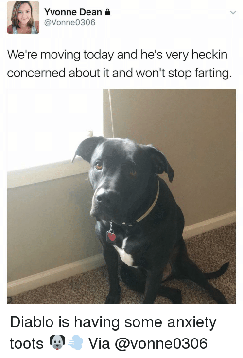 Toots: Yvonne Dean  (a Vonne0 306  We're moving today and he's very heckin  concerned about it and won't stop farting Diablo is having some anxiety toots 🐶💨 Via @vonne0306